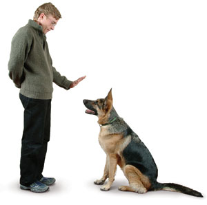 dog-trainer-delmar-ny
